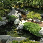 koi pond designs- irregular pond shapes