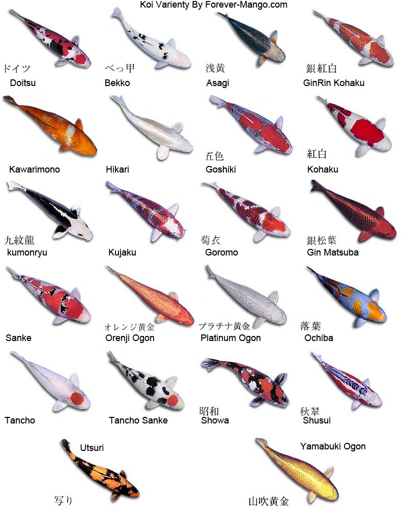 Types Of Koi