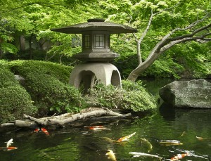 koi pond design- choose your location
